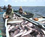 Cuba acuicola peces